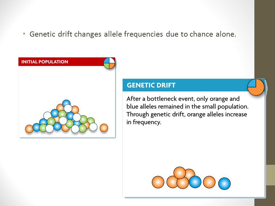 Genetic drift changes allele frequencies due to chance alone.