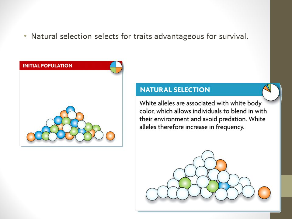 Natural selection selects for traits advantageous for survival.