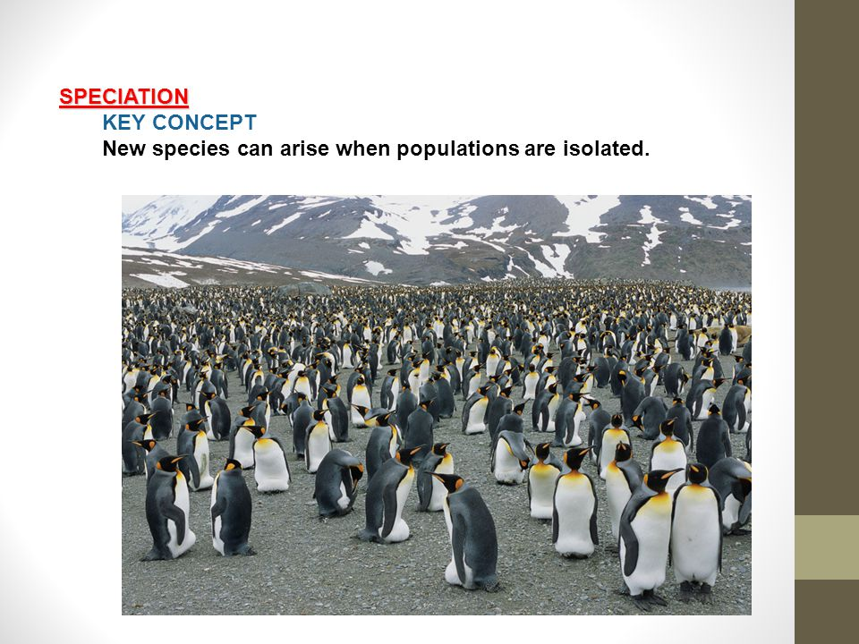 SPECIATION KEY CONCEPT New species can arise when populations are isolated.