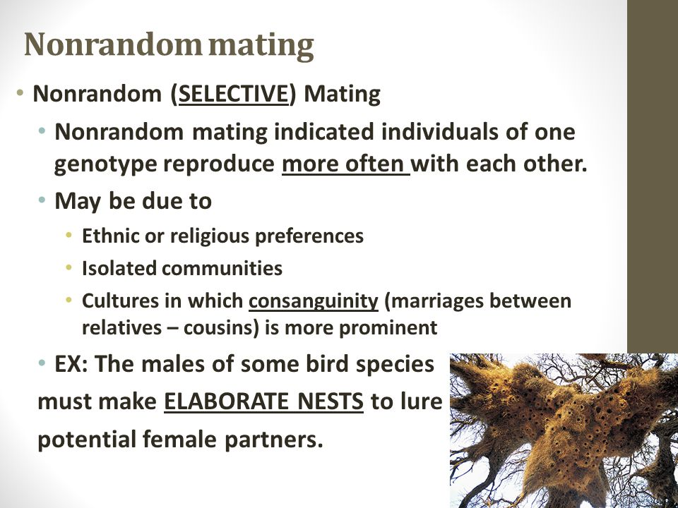 Nonrandom mating Nonrandom (SELECTIVE) Mating