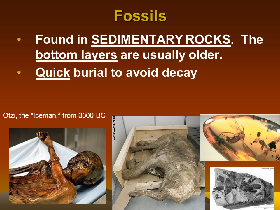 Fossils Found in SEDIMENTARY ROCKS. The bottom layers are usually older. Quick burial to avoid decay.