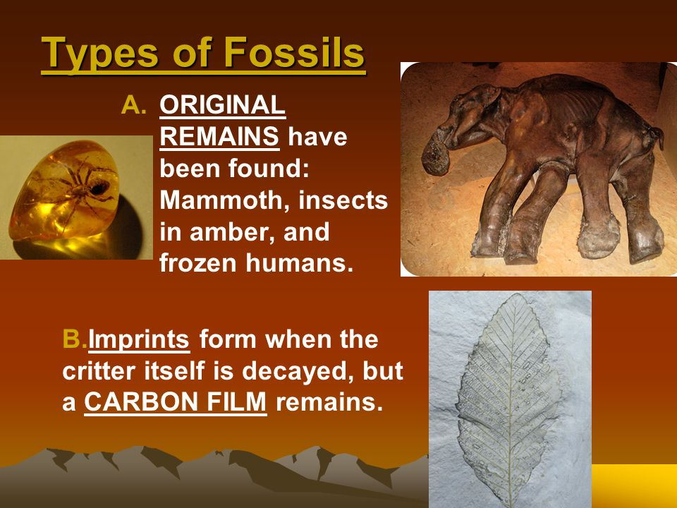 Types of Fossils ORIGINAL REMAINS have been found: Mammoth, insects in amber, and frozen humans.
