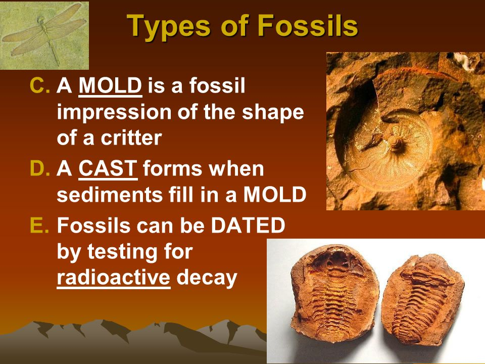 Types of Fossils A MOLD is a fossil impression of the shape of a critter. A CAST forms when sediments fill in a MOLD.