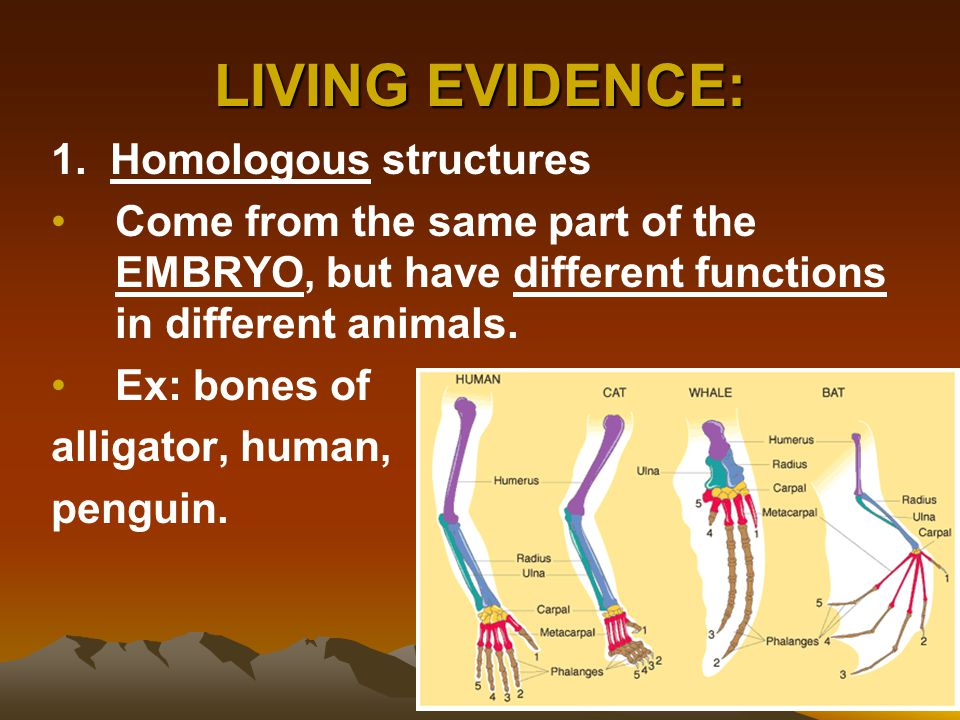 LIVING EVIDENCE: 1. Homologous structures
