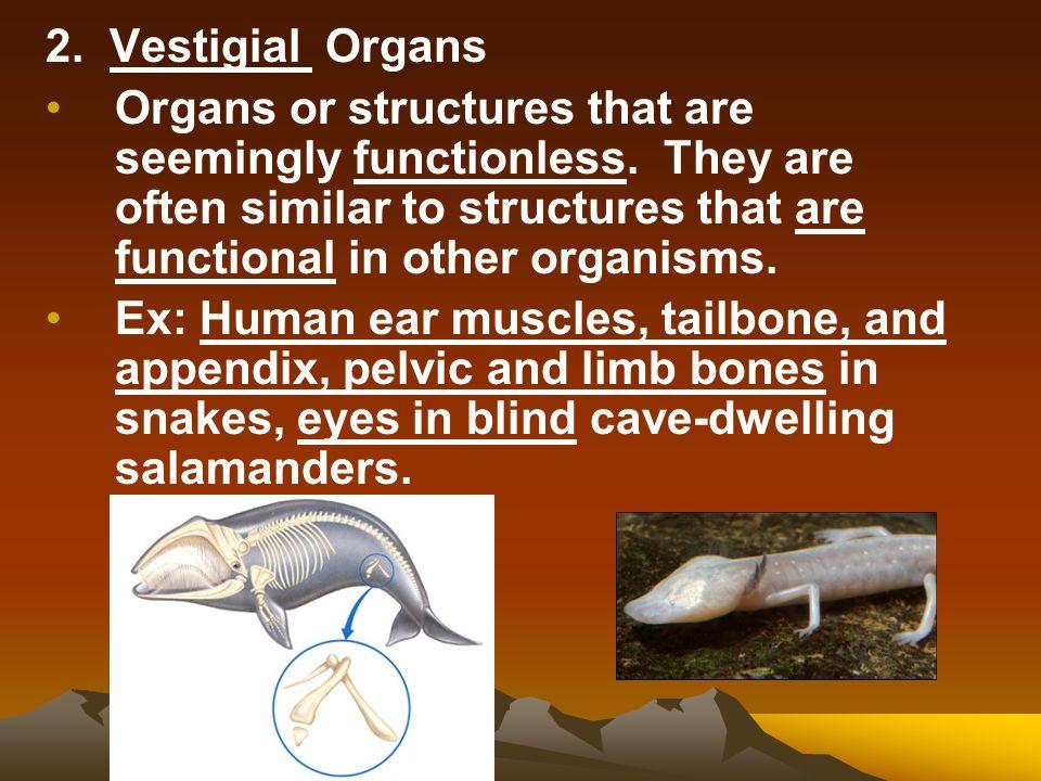 2. Vestigial Organs