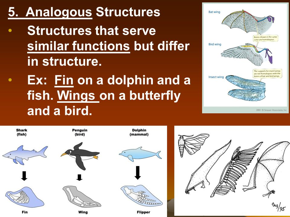 5. Analogous Structures Structures that serve similar functions but differ in structure.