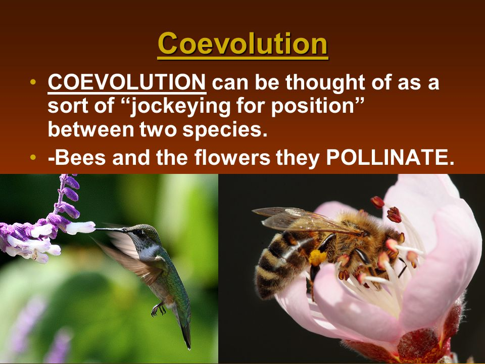 Coevolution COEVOLUTION can be thought of as a sort of jockeying for position between two species.