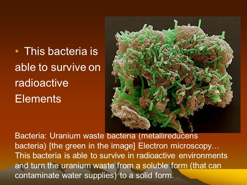 This bacteria is able to survive on radioactive Elements