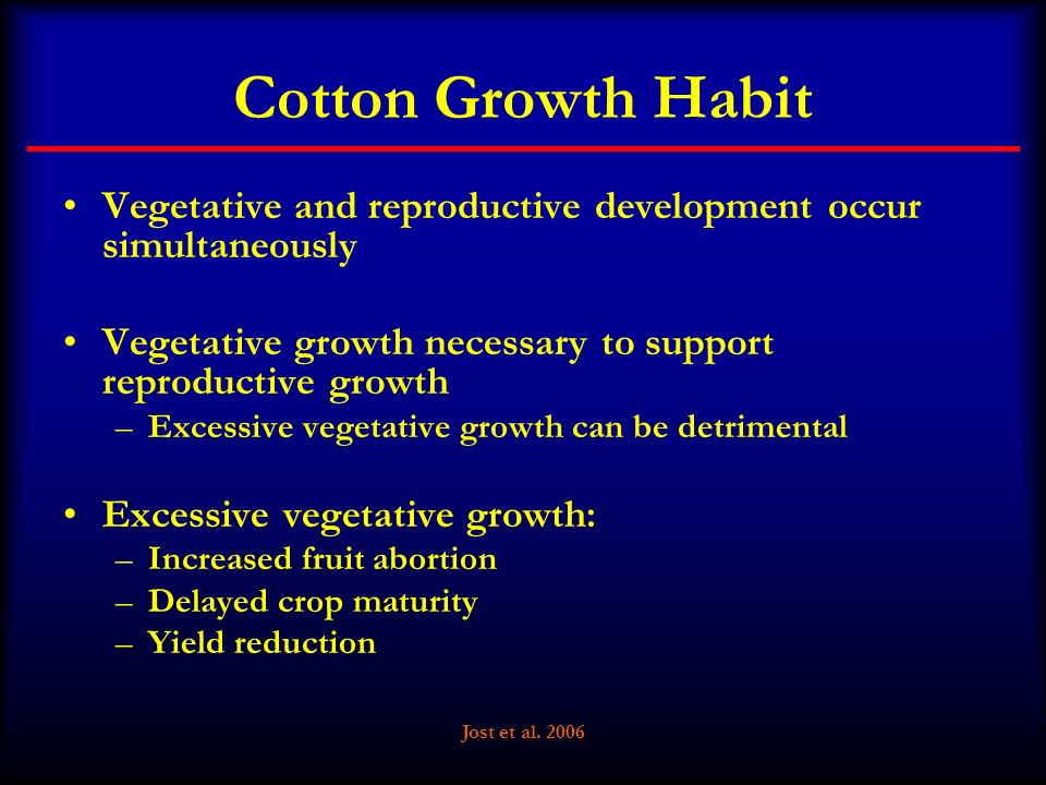 Cotton Growth Habit Vegetative and reproductive development occur simultaneously. Vegetative growth necessary to support reproductive growth.