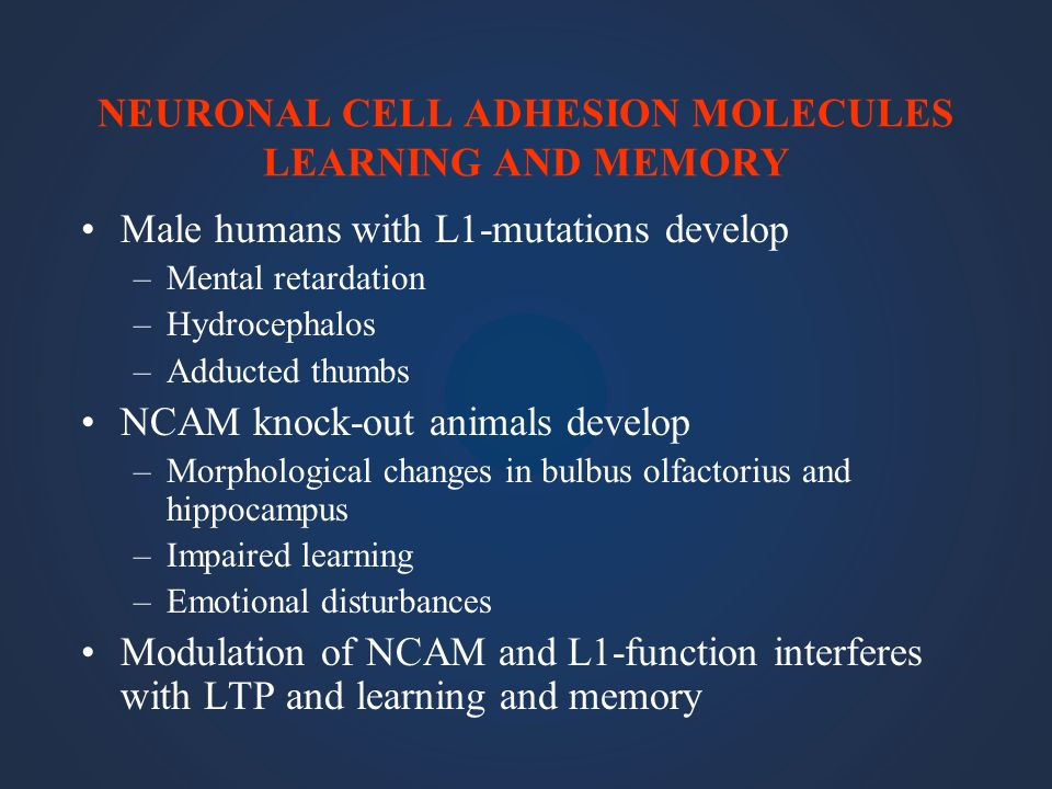 NEURONAL CELL ADHESION MOLECULES LEARNING AND MEMORY