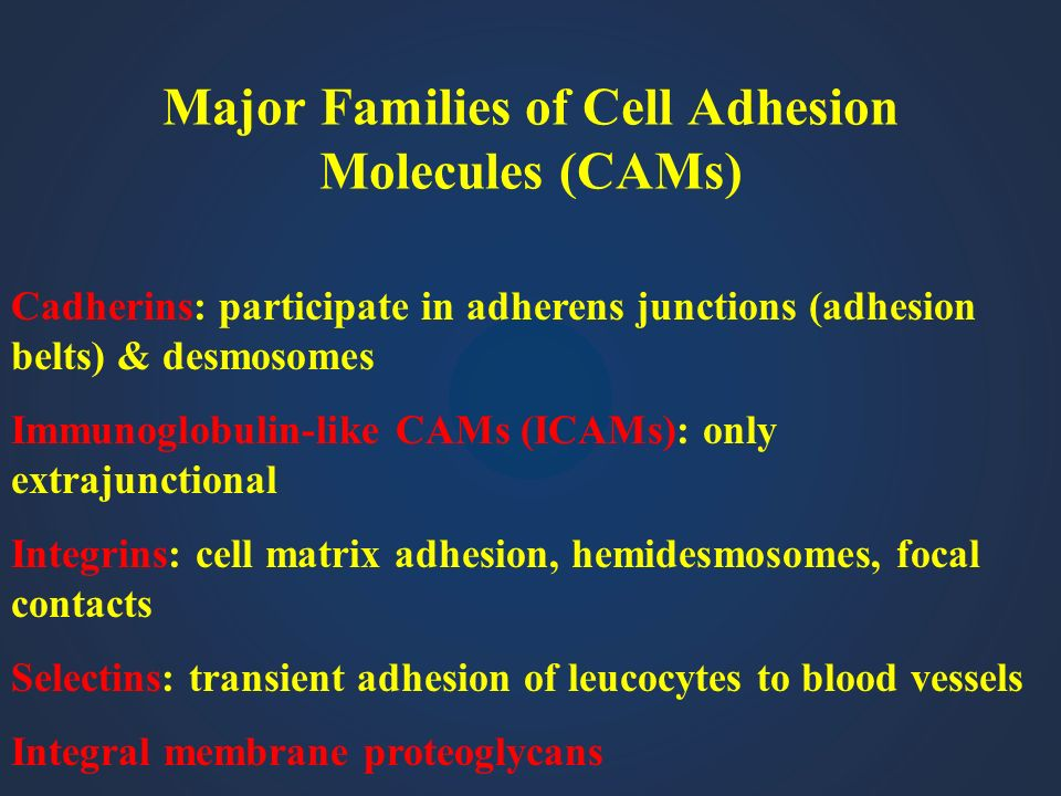 Major Families of Cell Adhesion Molecules (CAMs)