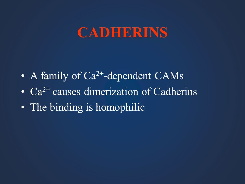 CADHERINS A family of Ca2+-dependent CAMs