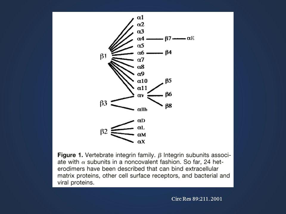Circ Res 89:211. 2001