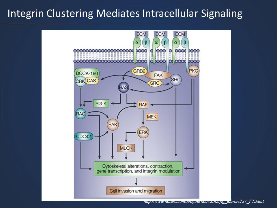 Integrin Clustering Mediates Intracellular Signaling