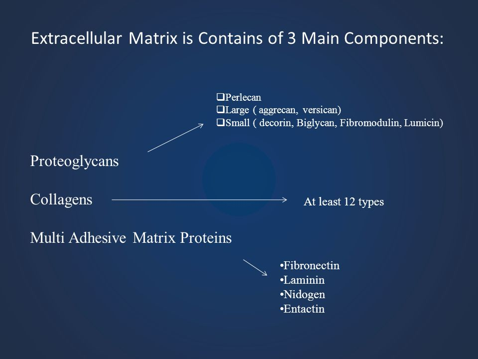 Extracellular Matrix is Contains of 3 Main Components: