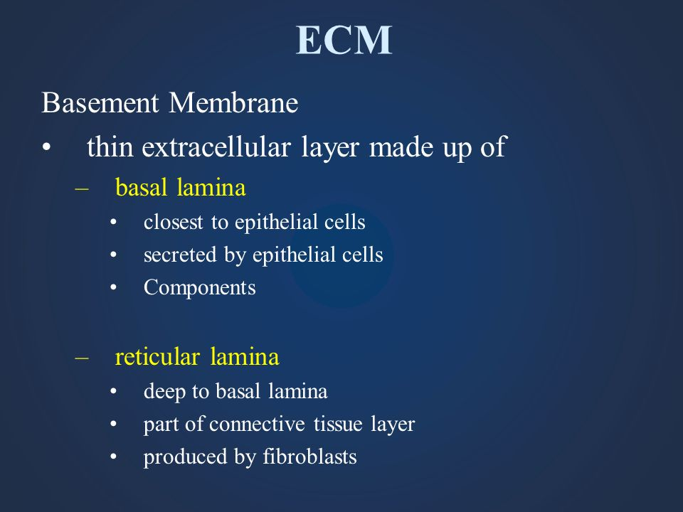 ECM Basement Membrane thin extracellular layer made up of basal lamina