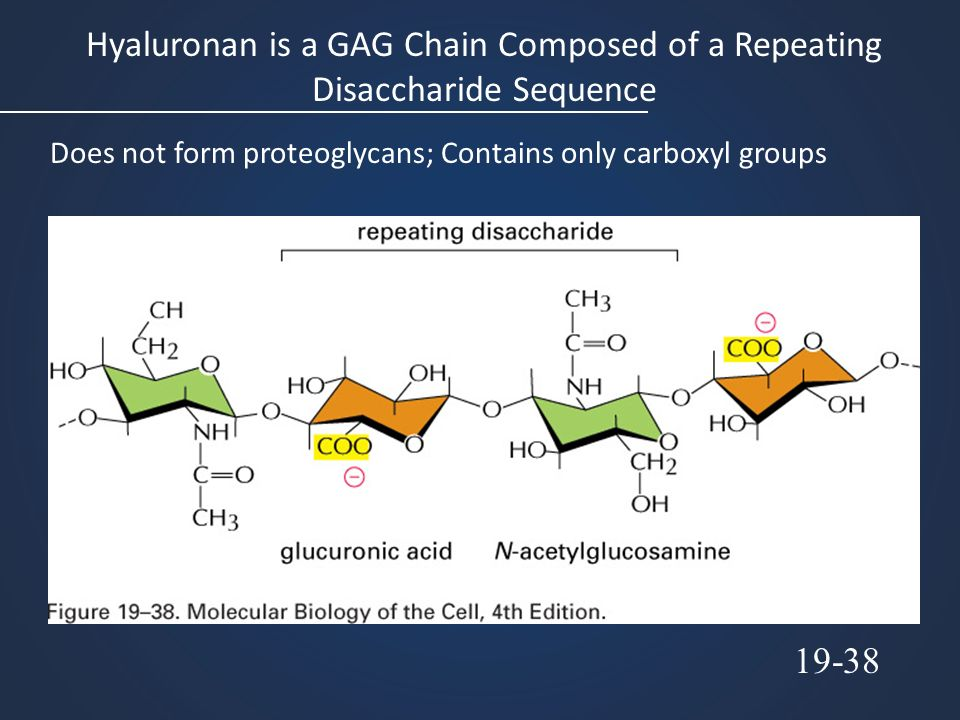 Hyaluronan is a GAG Chain Composed of a Repeating Disaccharide Sequence