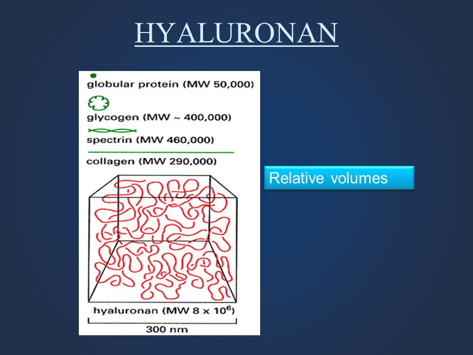 HYALURONAN Relative volumes