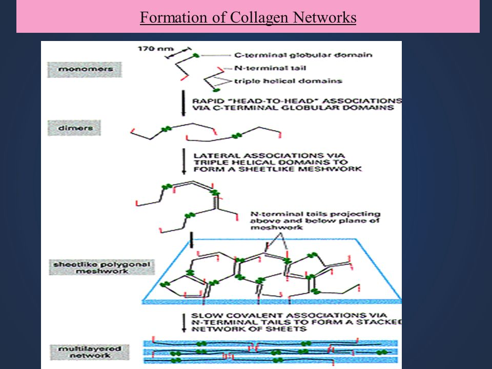 Formation of Collagen Networks
