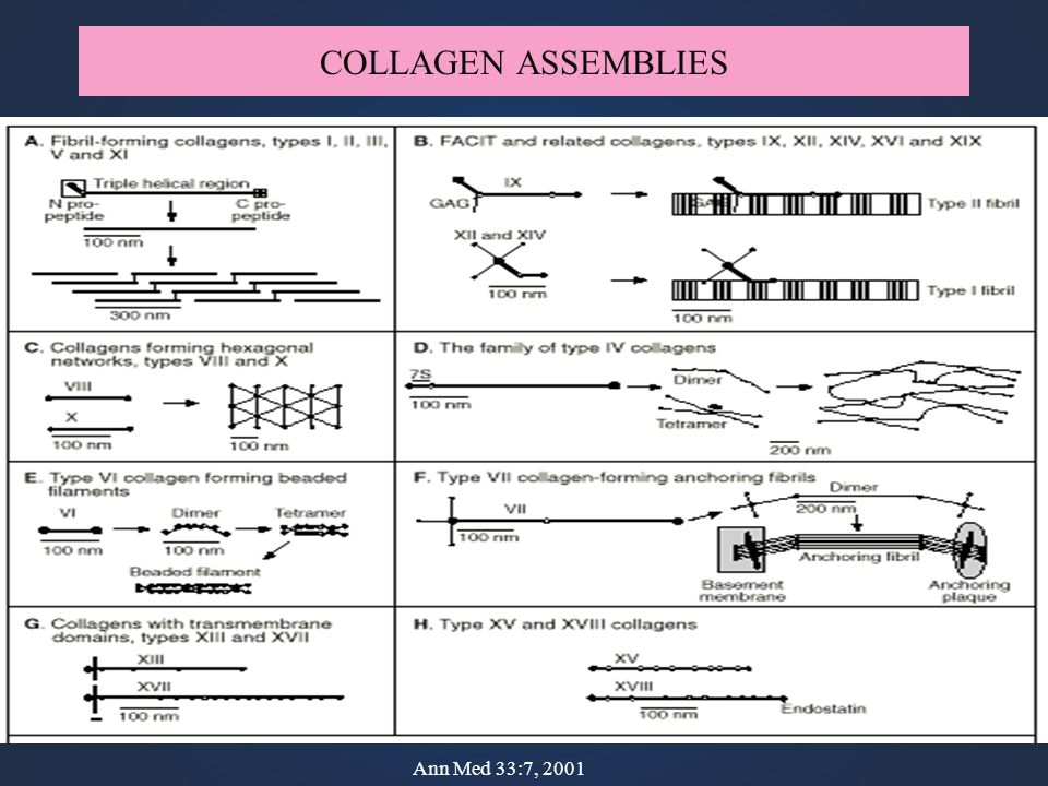 COLLAGEN ASSEMBLIES Ann Med 33:7, 2001