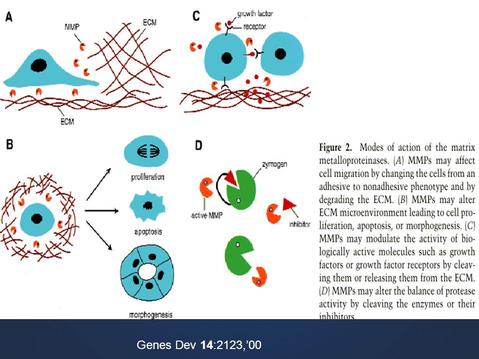 Genes Dev 14:2123,'00
