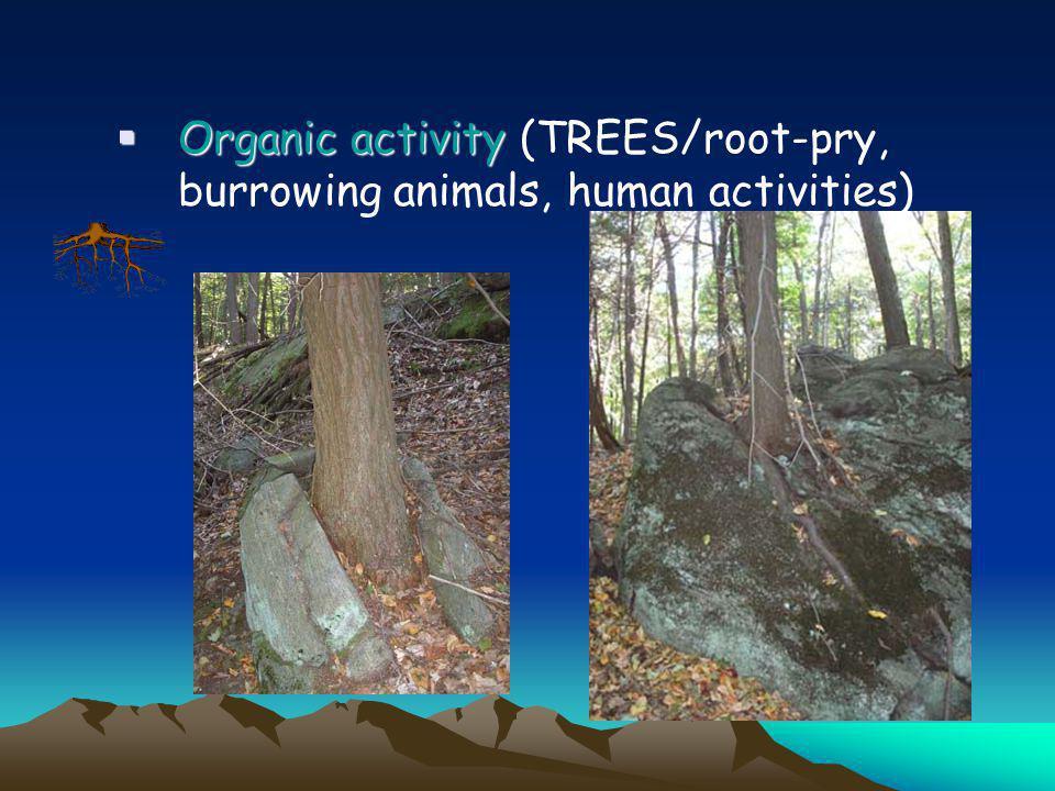 Organic activity (TREES/root-pry, burrowing animals, human activities)