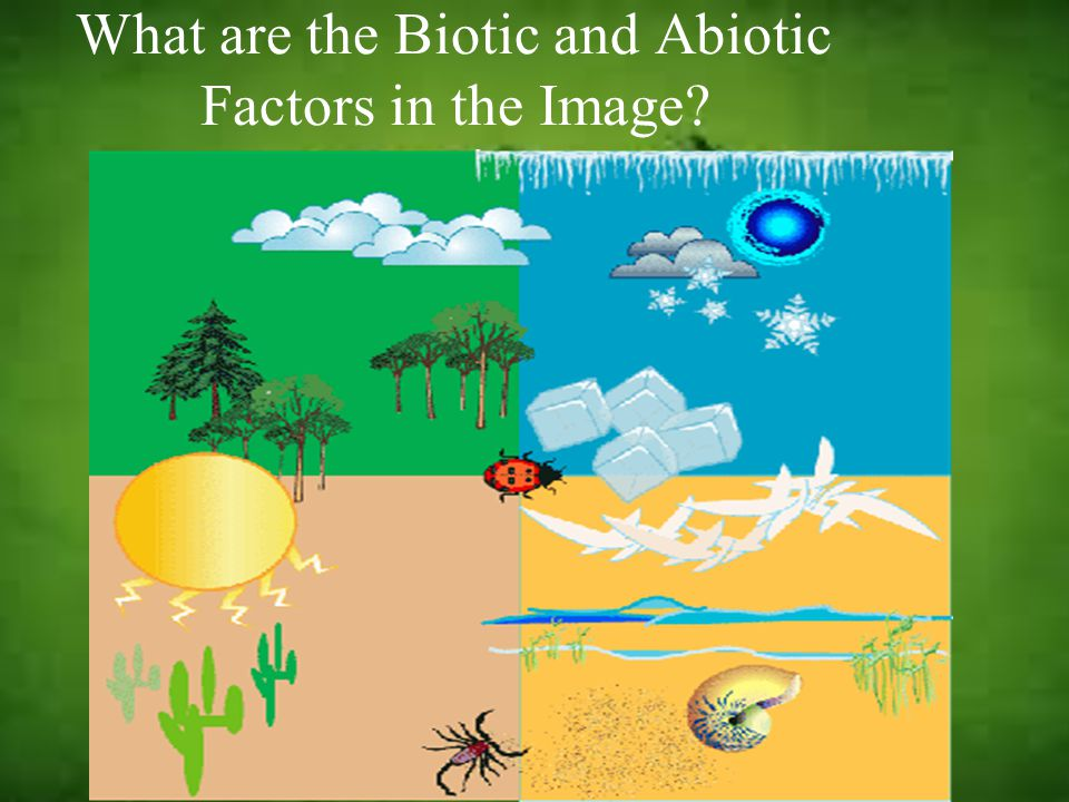What are the Biotic and Abiotic Factors in the Image