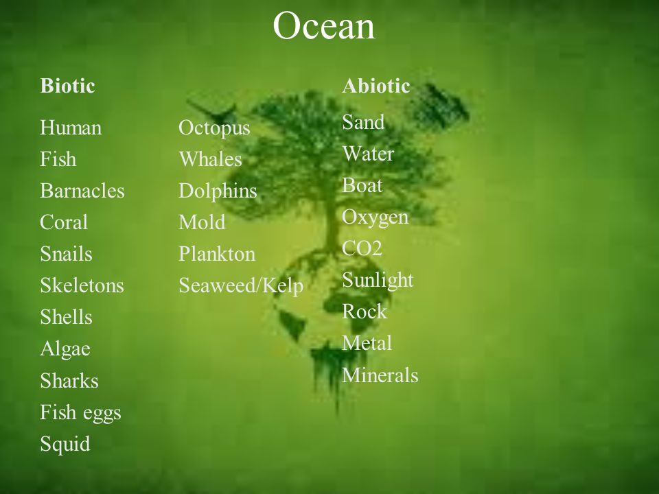 Ocean Biotic Abiotic Sand Water Boat Oxygen CO2 Sunlight Rock Metal