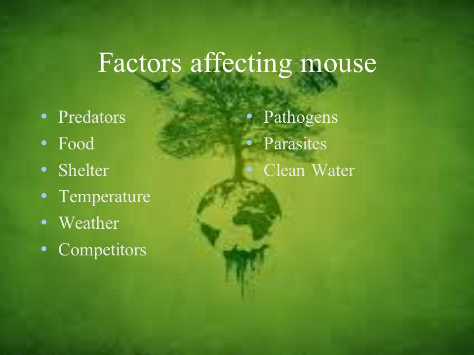 Factors affecting mouse