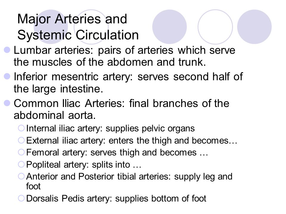 Major Arteries and Systemic Circulation