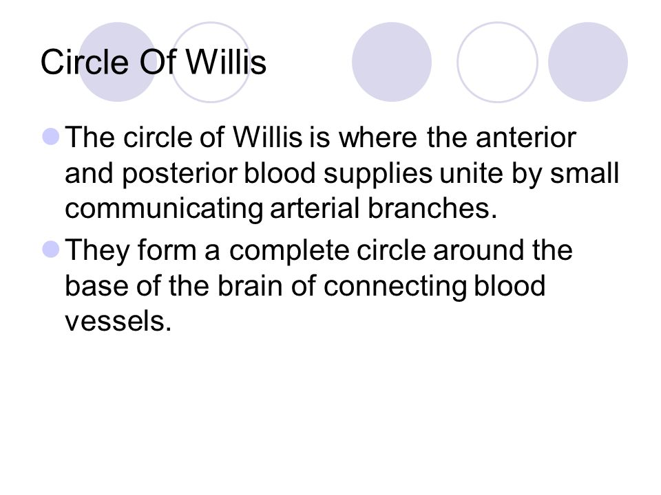 Circle Of Willis The circle of Willis is where the anterior and posterior blood supplies unite by small communicating arterial branches.