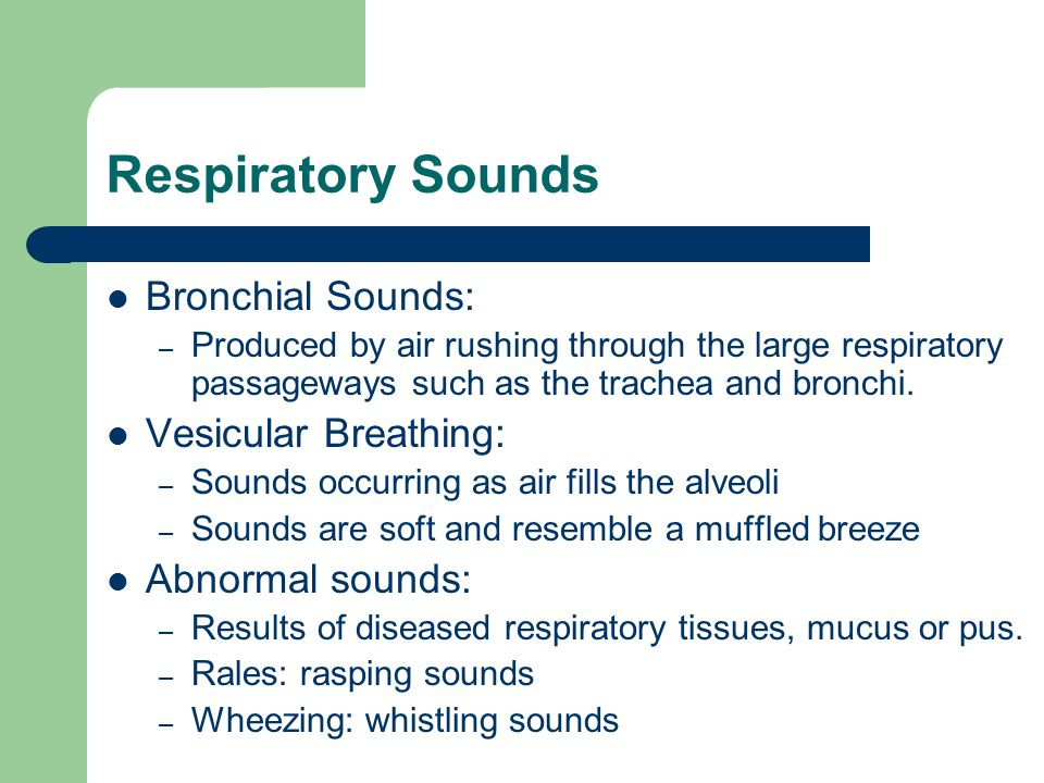 Respiratory Sounds Bronchial Sounds: Vesicular Breathing:
