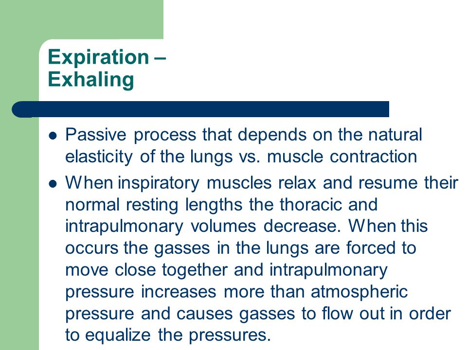 Expiration – Exhaling Passive process that depends on the natural elasticity of the lungs vs. muscle contraction.