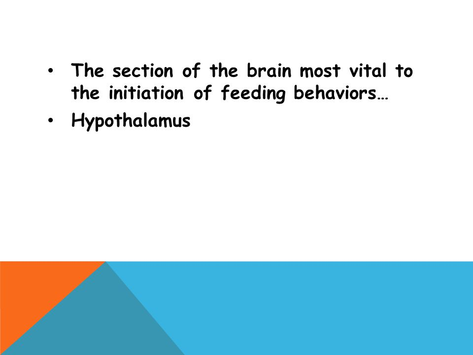 The section of the brain most vital to the initiation of feeding behaviors…