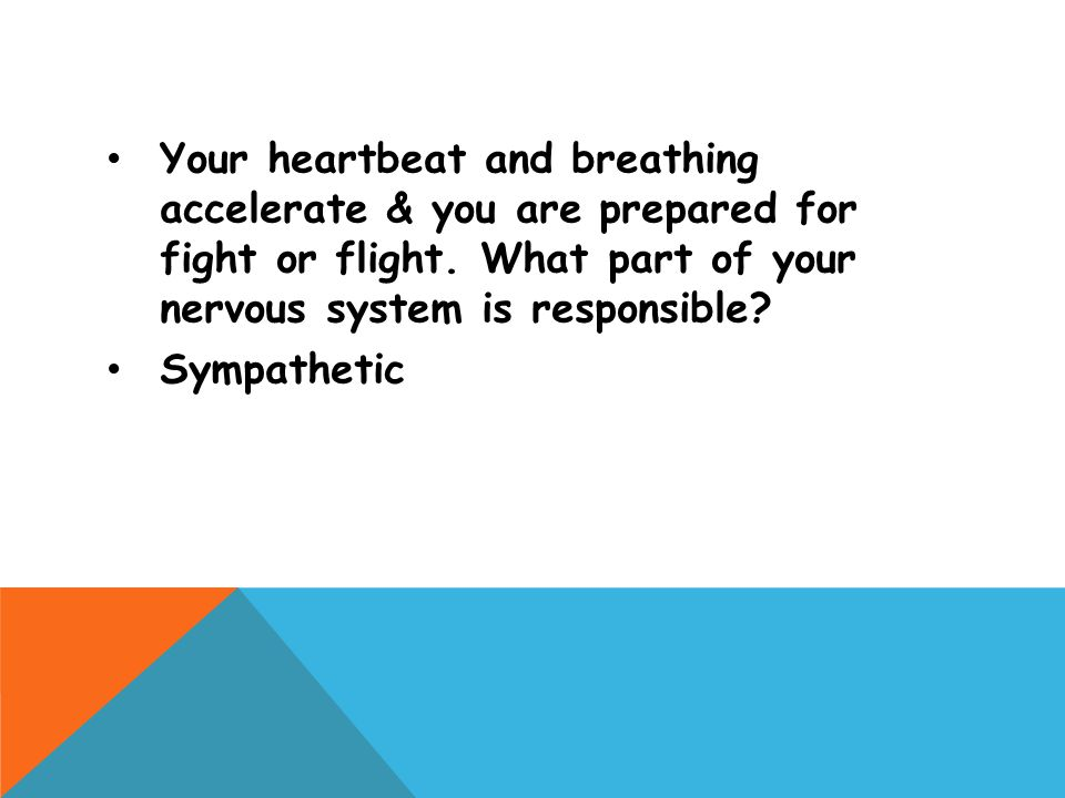 Your heartbeat and breathing accelerate & you are prepared for fight or flight. What part of your nervous system is responsible