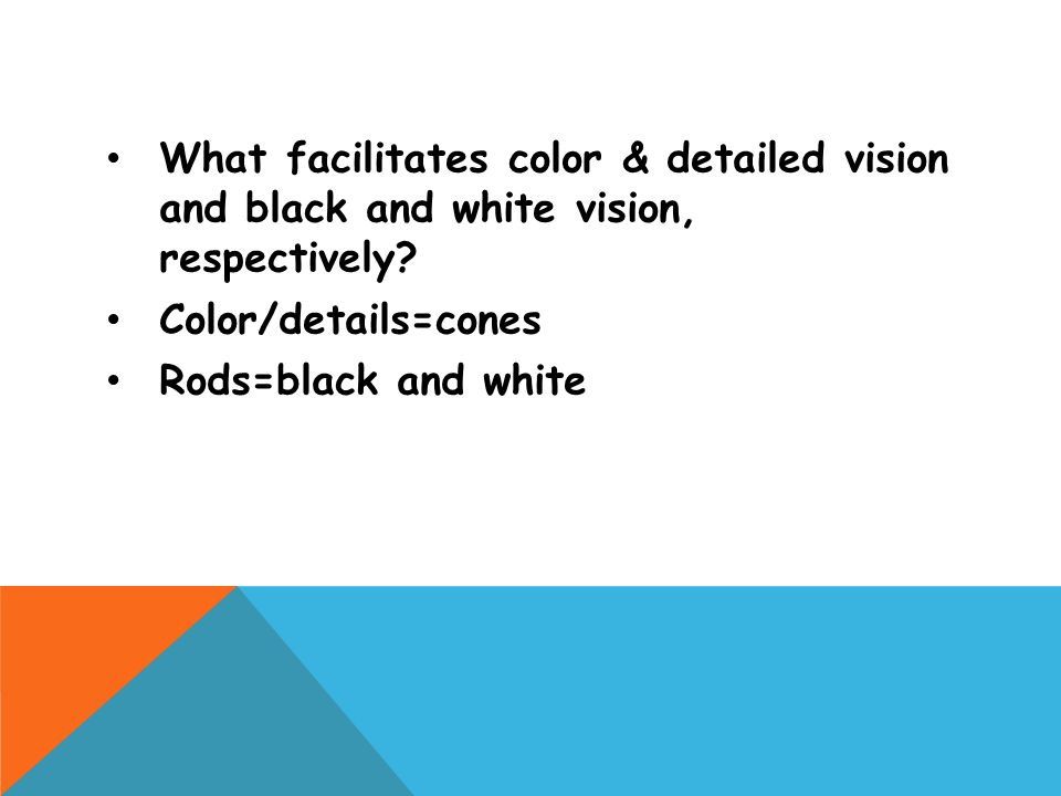 What facilitates color & detailed vision and black and white vision, respectively