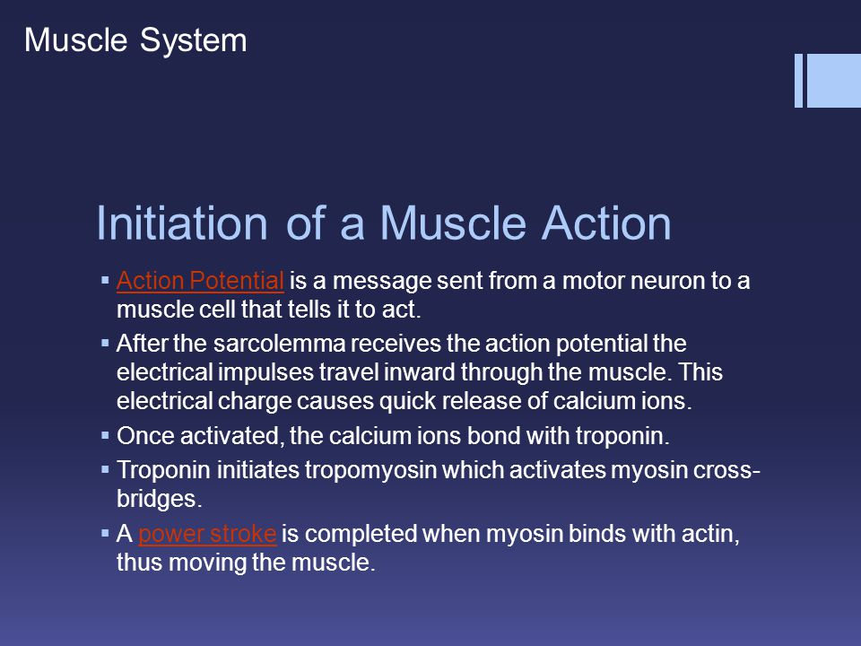 Initiation of a Muscle Action