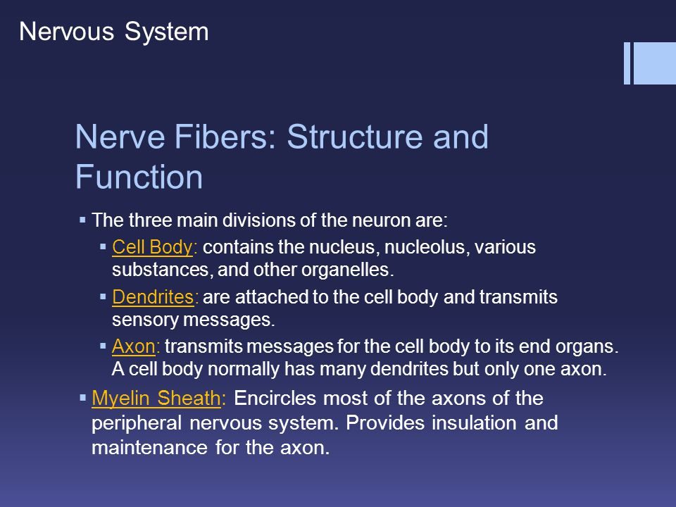 Nerve Fibers: Structure and Function