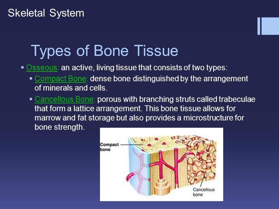 Types of Bone Tissue Skeletal System