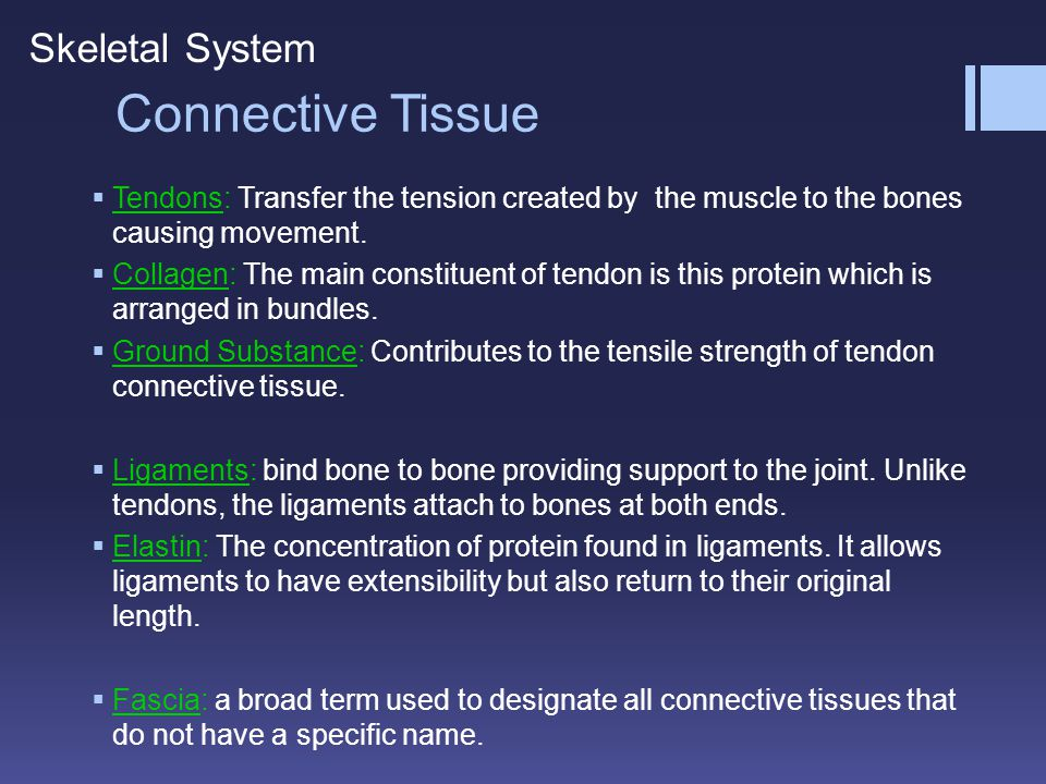 Connective Tissue Skeletal System