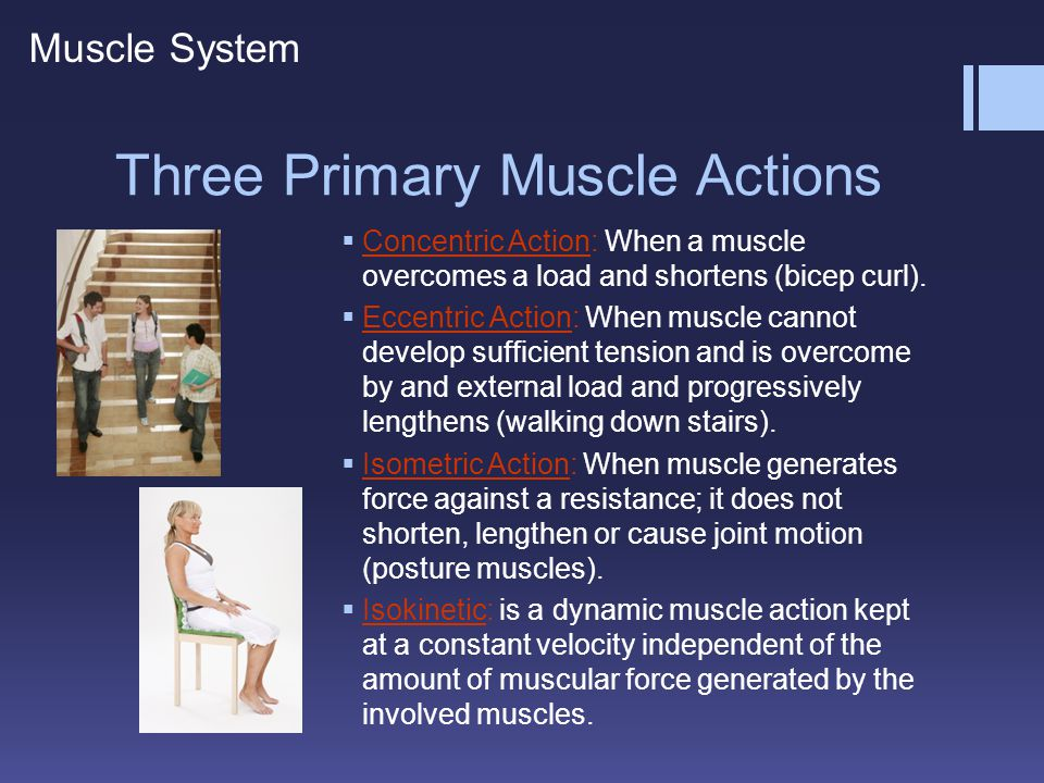 Three Primary Muscle Actions