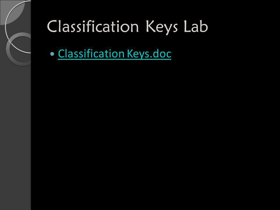 Classification Keys Lab