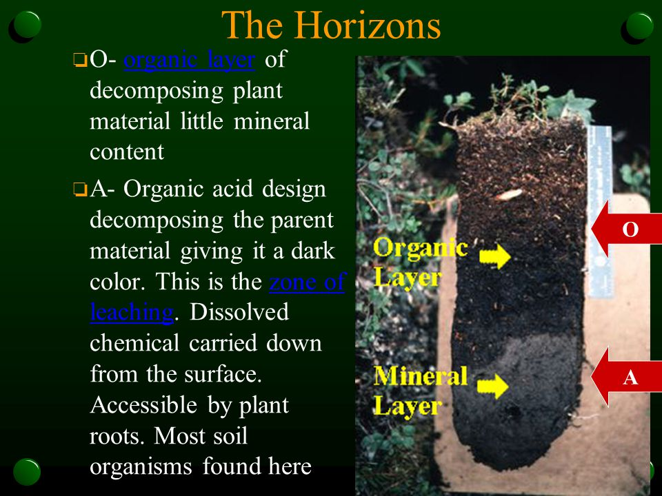 The Horizons O- organic layer of decomposing plant material little mineral content.