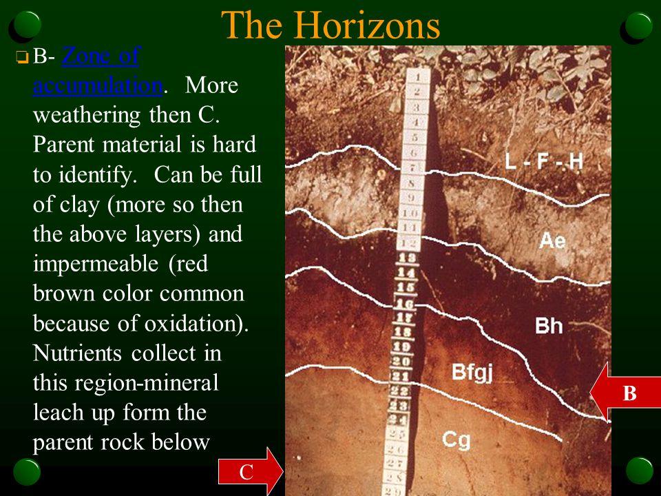 The Horizons