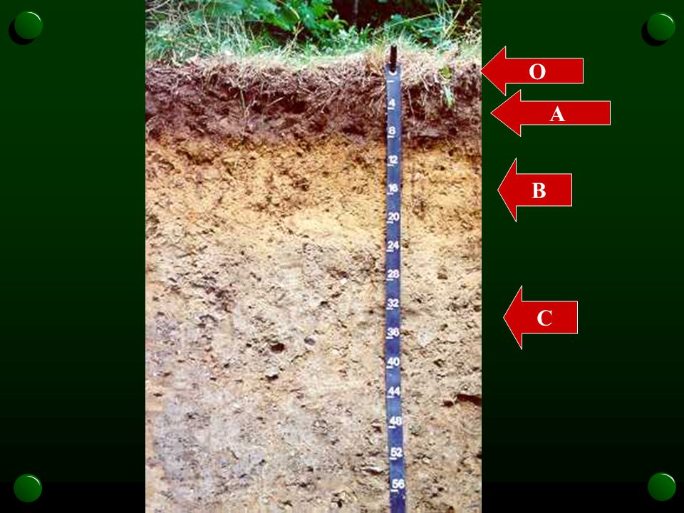 O A B C nesoil.com/images/ massasoit.htm