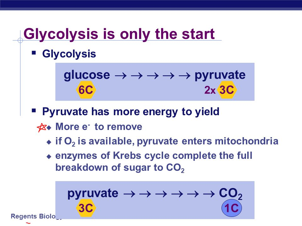 Glycolysis is only the start