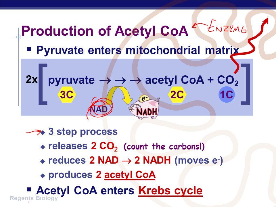 Production of Acetyl CoA