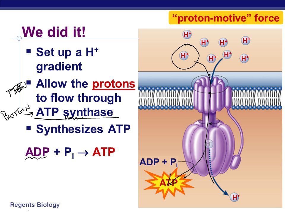 proton-motive force