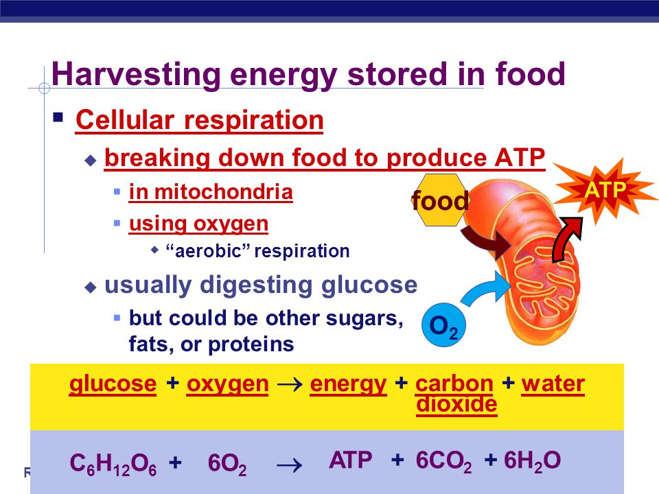 Harvesting energy stored in food
