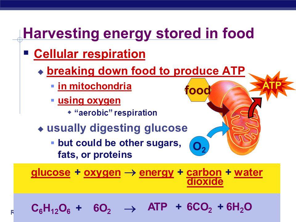 Harvesting energy stored in food